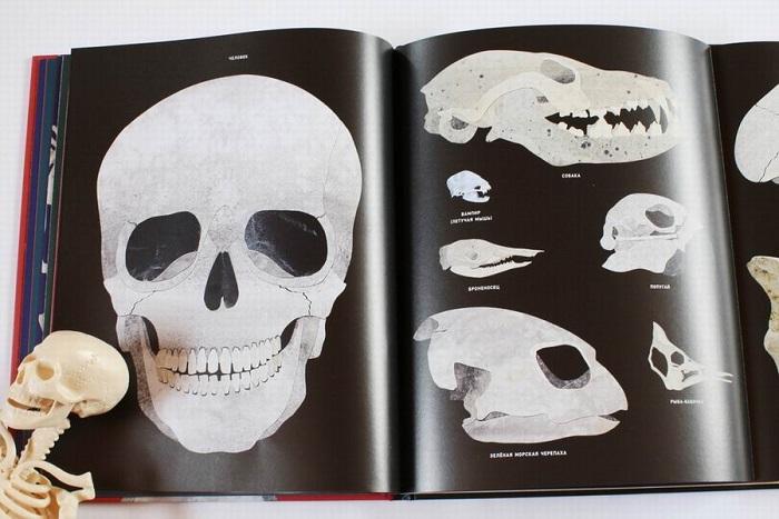 Kosti-i-skelety-10