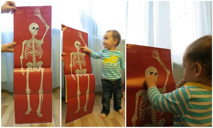 Kosti-i-skelety-2