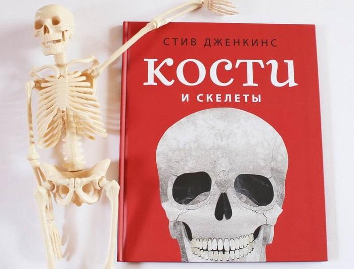 Kosti-i-skelety-3