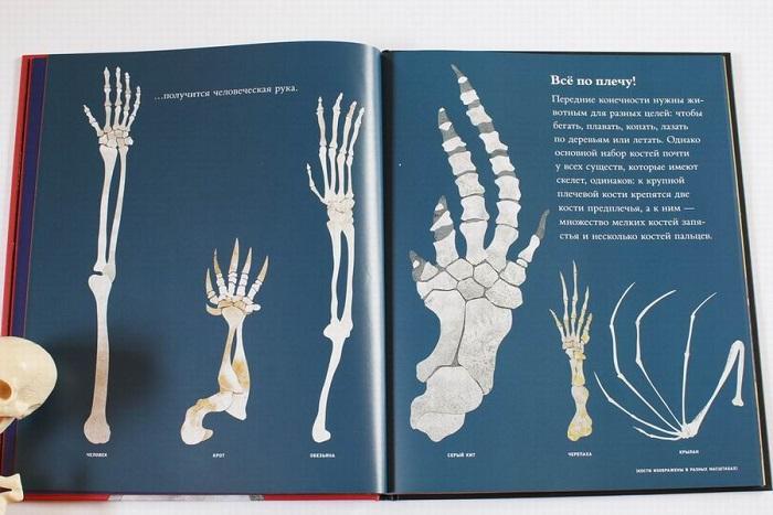Kosti-i-skelety-8