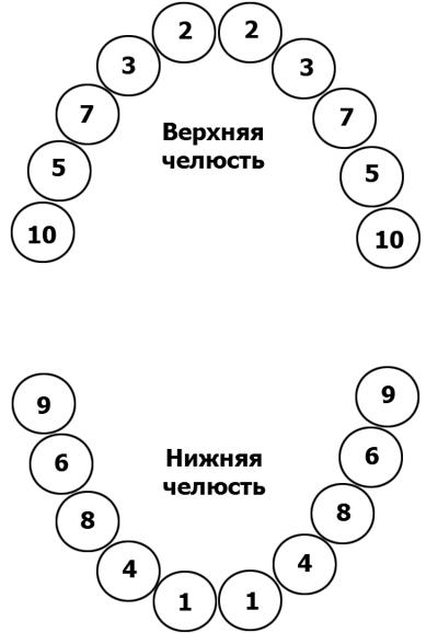 Развитие зубов представляет