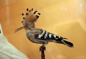 Дизайн в природе. Птицы