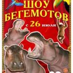 Шоу бегемотов