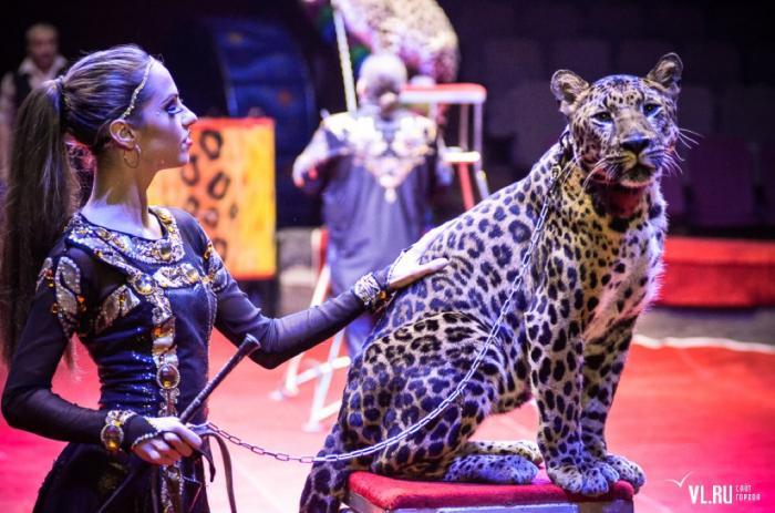 Цирк зверей в Ярославле