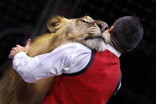 Один среди львов