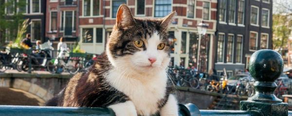 «Город глазами кота»